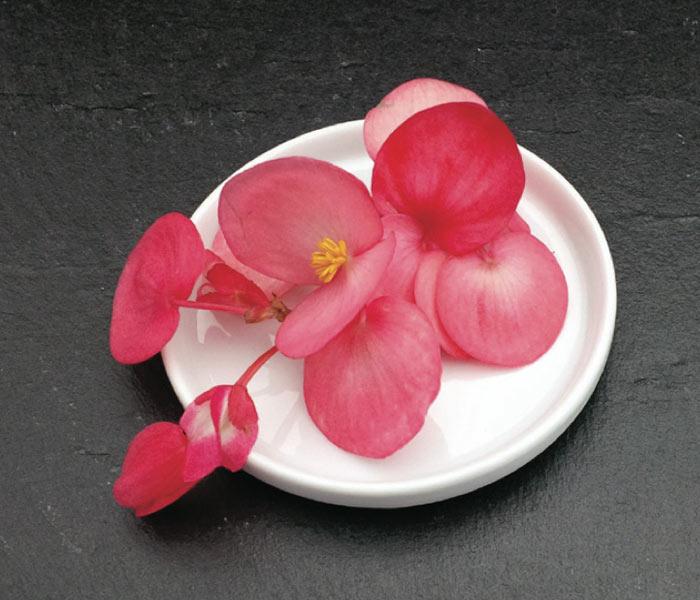Catalogue marius auda fleurs comestibles - Petale de rose comestible ...