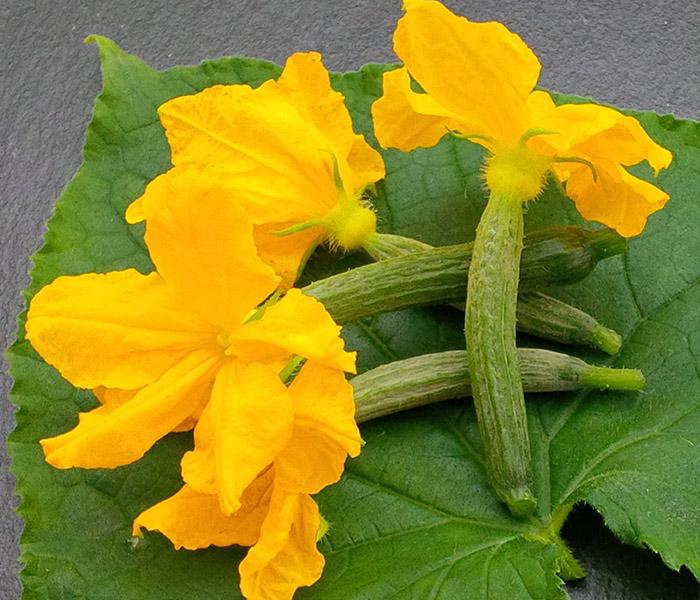 Catalogue marius auda fleurs comestibles for Catalogue de fleurs