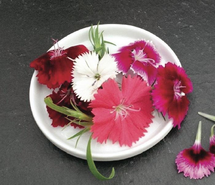 Catalogue marius auda fleurs comestibles - Oeillet du poete ...