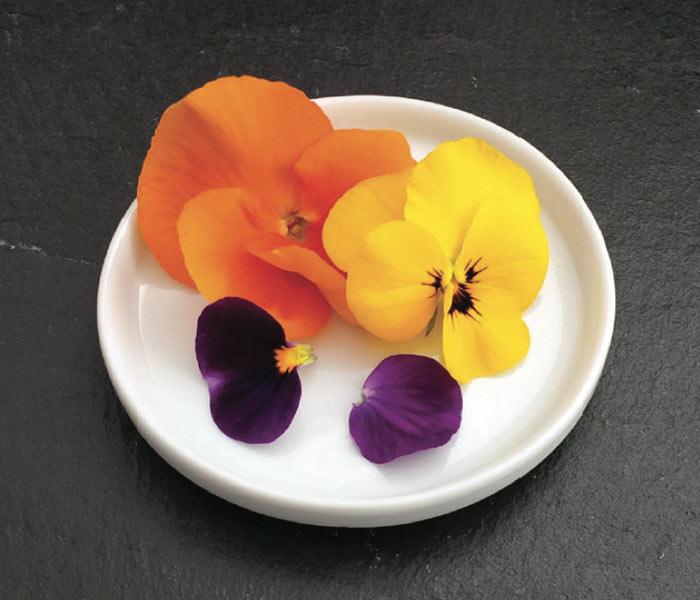 Catalogue Marius Auda Fleurs Comestibles