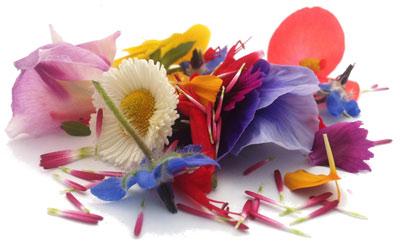 MARIUS AUDA - Mangez des fleurs! 7b8c533b76a